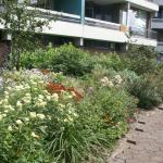 bloemen bij groenstrook flat