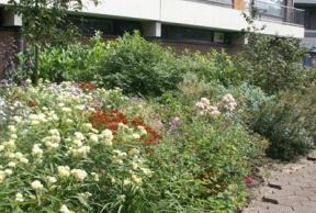 Tuin bij een flat